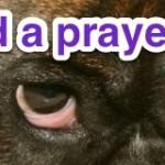 I need a prayer today