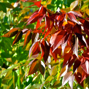 autumn applause detail-med