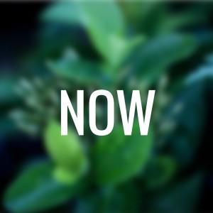 NOW-3